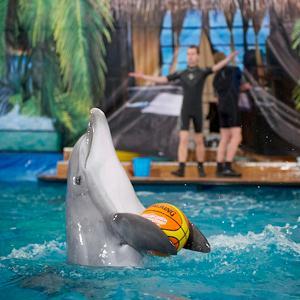 Дельфинарии, океанариумы Боброва