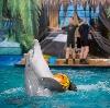 Дельфинарии, океанариумы в Боброве