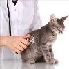 Ветеринарные клиники в Боброве